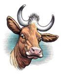 Cow by Bill Sanderson