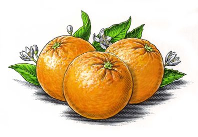 Oranges by Dave Hopkins