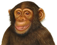 Chimpanzee by Fiammetta Dogi