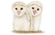Owls by Fiammetta Dogi