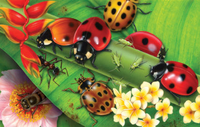 Insects by Fiammetta Dogi