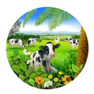 Ghee Packaging Cows by Fiammetta Dogi