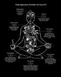 Healing Herbs by Lynn Hatzius