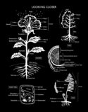 Looking Closer Plant Anatomy by Lynn Hatzius