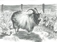 Ram by Jonathan Leach