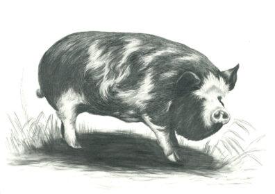Pig by Jonathan Leach