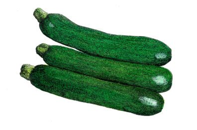 Courgettes by Jonathan Leach