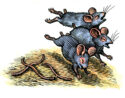 Three Blind Mice by Bill Sanderson