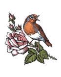 Robin by Bill Sanderson