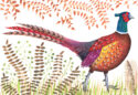 Pheasant by Jennie Maizels