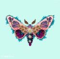 irisdeluz_butterfly1