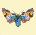 Moth by Iris de Luz